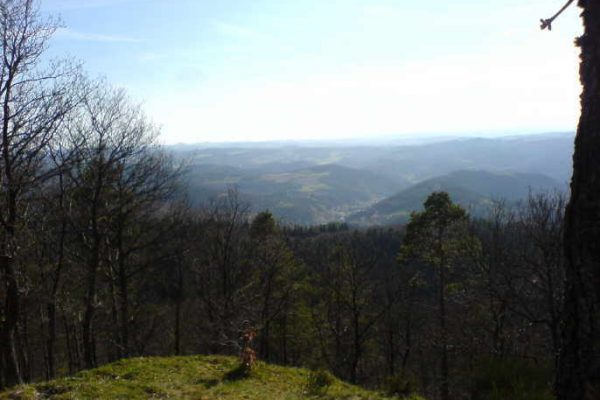 """Einladung zum """"Waldbegang"""" Gemeinde Leimbach"""